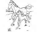 disegno di fattrice con puledro da colorare..disegno di cavalla che corre con puledro da colorare..stallone da colorare