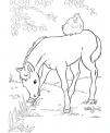 disegno puledro da colorare..disegno cavallo nel box del maneggio da colorare..cavallo con sella e cavaliere da colorare..cavallo con ferro di cavallo da colorare