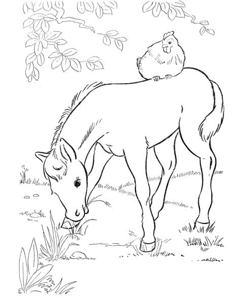 disegni da colorare sul computer dei cavalli