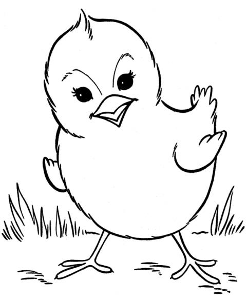 gallina gallo pulcino pollo pollastro cappone
