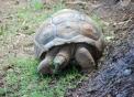 immagine di tartaruga..foto di tartaruga nel prato..cosa mangia la tartaruga?dove vive la tartaruga?sul sito bambiniinfattoria scopri la tartaruga