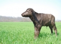 annutolo in fattoriagelato di bufala in piemont