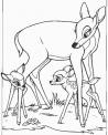 disegno capriolo da colorare..disegno cervo e cerbiatto da colorare..disegno bambi da colorare..camoscio e muflone da colorare