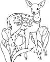 disegno capriolo da colorare..disegno bambi da colorare..ungulato da colorare..cervo con corna da colorare..daino nel bosco da colorare..animali del sottobosco da colorare