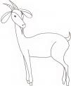 disegno di capra di montagna..disegno muflone..disegno becco capra maschio..disegno antilope..disegno cerbiatto o capriolo da colorare