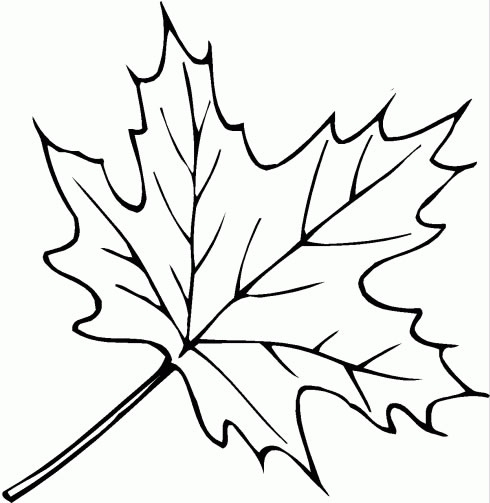 disegno di una foglia da coloraredisegno foglia