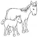 cavalla o fattrice da colorare..cavalla con puledro da colorare..puledrino disegno..cavallo della fattoria disegno da colorare per bambini