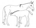 cavalla che allatta puledrino da colorare..puledro che beve il latte da mamma cavalla da colorare..cavallo argentino da colorare