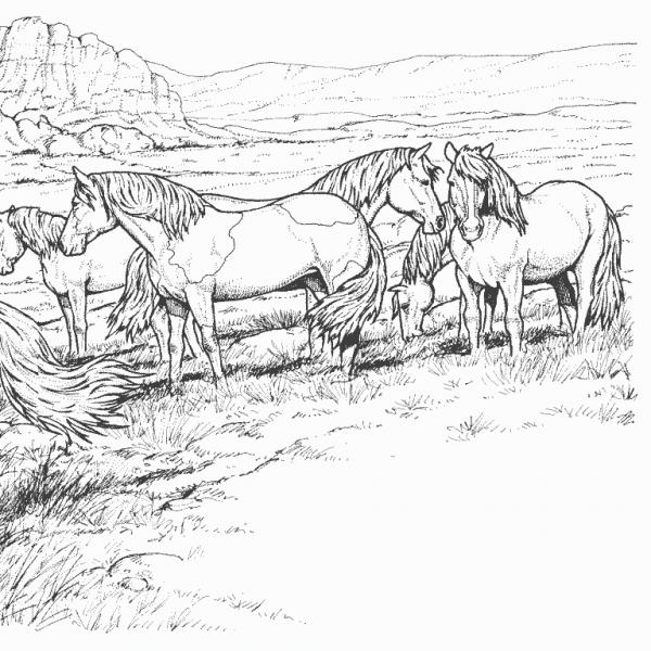 Immagini Di Cavalli Selvaggi Da Stampare Powermall