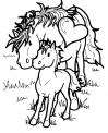 cavalla o fattrice con il suo puledrino da colorare..puledro o piccolo cavallo con mamma cavalla..pony da colorare