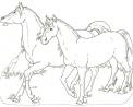 branco di cavalli da colorare..cavallo arabo da colorare..corsa di cavalli da colorare con fantino..cavallino da colorare