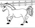 cavallo in fattoria didattica a como da colorare..cavallo in fattoria didattica a lecco..cavallo in fattoria didattica a sondrio..cavallo in fattoria didattica a lodi