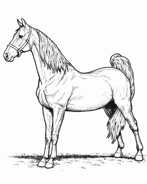 Cavallo colorare - Cavallo da colorare pagine stampabili ...