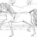 disegno cavallino da colorare..cavallo della fattoria didattica di roma da colorare..cavallo in fattoria didattica a bologna..cavallo in fattoria didattica a parma