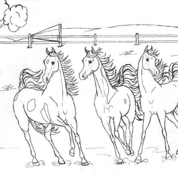 disegni da colorare di cavalli da corsa