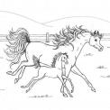 disegno cavalla con puledro che corrono liberi da colorare..cavallo in fattoria didattica a genova da colorare..cavallo in fattoria didattica vicino a torino