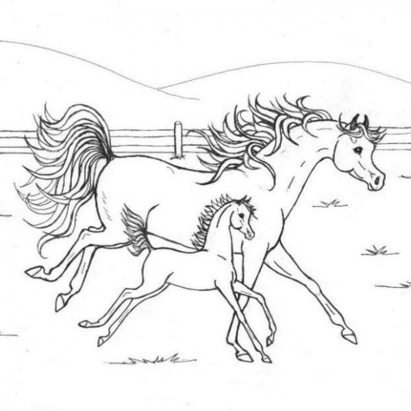 Disegno cavalla con puledro che corrono liberi da colorare for Disegni da colorare dei cavalli