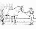 cavallo con cavaliere da colorare..cavallo in fattoria didattica a napoli..cavallo in fattoria didattica a salerno..cavallo in fattoria didattica in campania