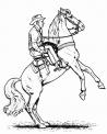 disegno cavallo americano da colorare..cavallo in fattoria didattica a bari..cavallo in fattoria didattica a lecce..cavallo in fattoria didattica a foggia
