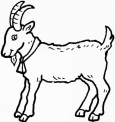 capra da colorare disegno..capretta in fattoria da colorare..capra in fattoria didattica in provincia di milano da colorare..capretta con le corna da colorare