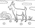 capretta da colorare..capretta in fattoria didattica in provincia di varese da colorare e visitare..capra vicino a varese fattoria didattica per bambini..didattica in fattoria con le capre