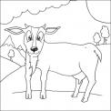 capra da colorare..capra delle valli del luinese da colorare..capra in fattoria didattica vicino a luino..fattoria didattica vicino alla svizzera con capre