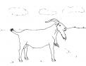 disegno capra nel prato da colorare..disegno gregge di capre da colorare..capra camosciata delle alpi da colorare..capra saanen da colorare