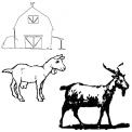 caprette della fattoria didattica da colorare..visita una fattoria didattica con le capre..capretto in fattoria didattica nel lazio