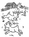 caprette che corrono da colorare..fattoria didattica per bambini con capre vicino a milano..capra fattoria didattica lombardia..fattoria didattica veneto con animali