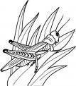 disegno insetto da colorare..cavalletta da colorare..vermicello da colorare..insetti della fattoria didattica da colorare..cicala da colorare