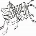 insetto da colorare..disegno insetto nel prato da colorare..maggiolino da colorare..formichina da colorare