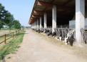 fattoria didattica a legnano..didattica in fattoria a milano con cavallo in fattoria..facciamo il formaggio per le scuole in fattoria didattica