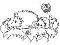 disegno riccio da colorare..il riccio vive nel prato della fattoria..fattoria didattica a milano..didattica in fattoria in provincia di milano