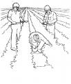 disegno orto da colorare..contadino nell'orto da colorare..fattoria didattica catania..fattoria didattica siracusa