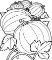 zucche da colorare..disegno zuccone da colorare..fattoria didattica ancona..fattoria didattica urbino