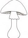 fungo del sottobosco da colorare..fungo porcino da colorare..fattoria didattica cesena..fattoria didattica forli