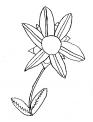 disegno fiore da colorare..fiorellino da colorare..fattoria didattica siena..fattoria didattica livorno