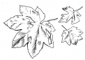 disegno foglie in autunno da colorare..foglie e semi da colorare..fattoria didattica lucca..fattoria didattica pistoia
