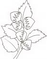 disegno nocciole da colorare..noccioline da colorare..fattoria didattica massa carrara..fattoria didattica prato