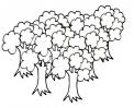 disegno bosco di piante da colorare..foresta da colorare..fattoria didattica ravenna..fattoria didattica ferrara