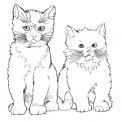 disegno gatto da colorare..gattini e micetti da colorare..fattoria didattica bologna..fattoria didattica modena