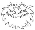 disegno uccellini nel nido da colorare..nido di uccelli da colorare..fattoria didattica genova