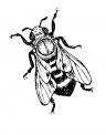 disegno ape della fattoria da colorare..ape regina da colorare..fattoria didattica regione lombardia