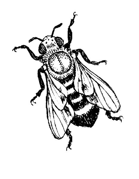 Disegno ape della fattoria da colorare ape regina da for Immagini api per bambini