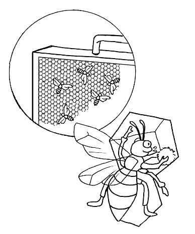 Disegno ape nell 39 arnia con miele da colorare ape regina for Immagini api per bambini