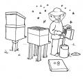 disegno apicoltore con telaini di miele da colorare..apicoltore che raccoglie miele pappa reale propoli da colorare..fattoria didattica regione lazio