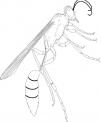 disegno vespa da colorarea..disegno bombo da colorare..fattoria didattica regione veneto