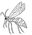 disegno calabrone da colorare..vespa da colorare..fattoria didattica regione toscana