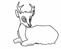 disegno piccolo cervo da colorare..cerbiatto da colorare..fattoria didattica in provincia di sondrio