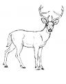 disegno cervo con corna da colorare..renna da colorare..alce da colorare..fattoria didattica regione puglia